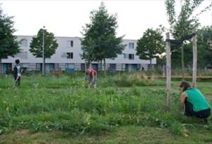 Foto Eetbare Stad Buurtboomgaard H Meer
